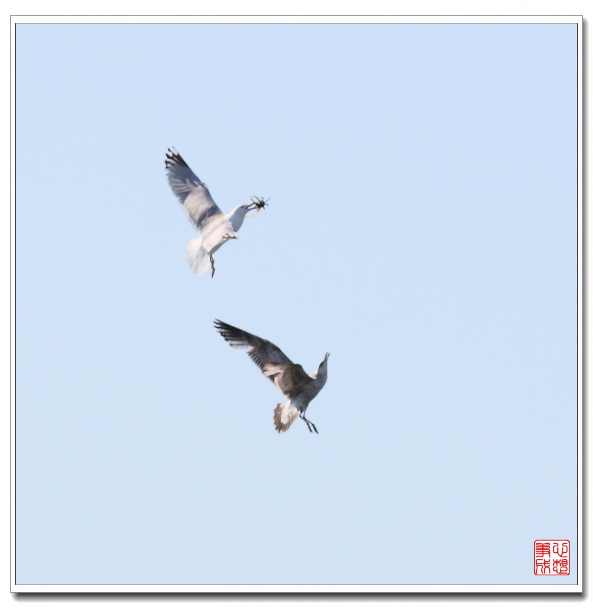 【心想事成】空中表演-海鸥_图1-16