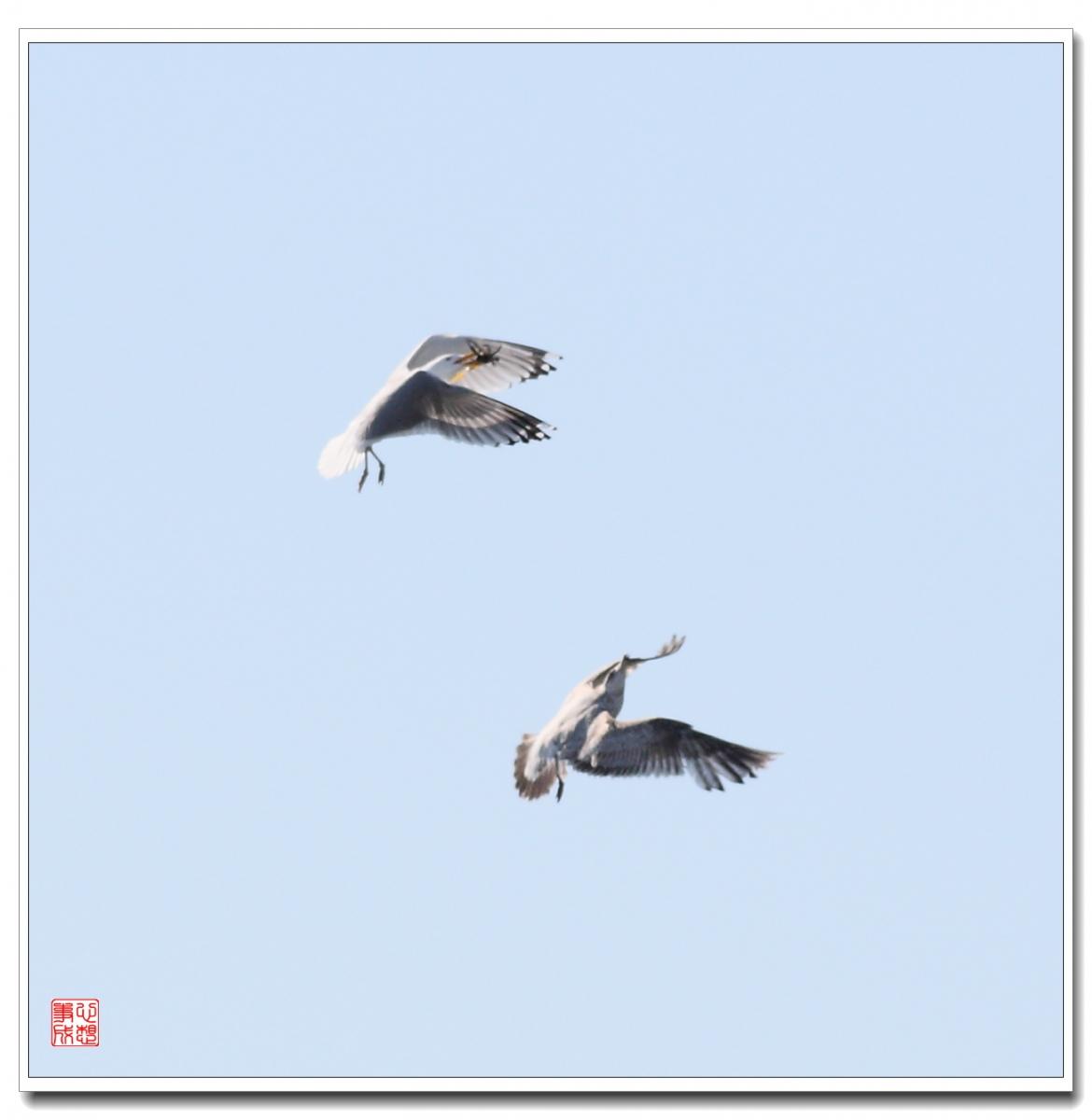 【心想事成】空中表演-海鸥_图1-17