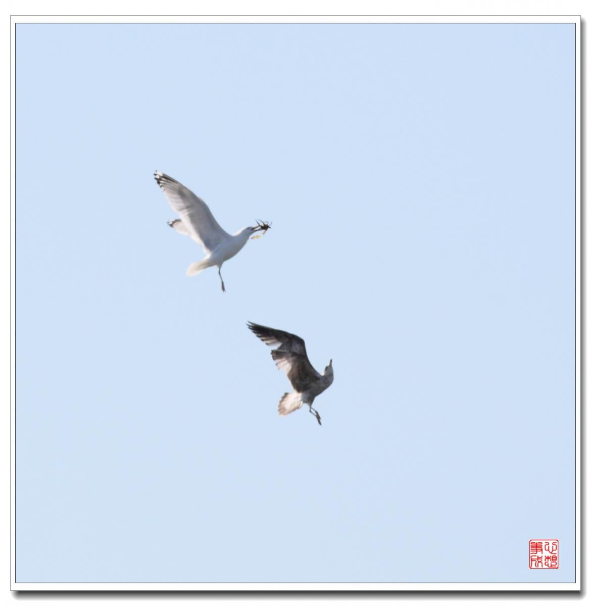 【心想事成】空中表演-海鸥_图1-18