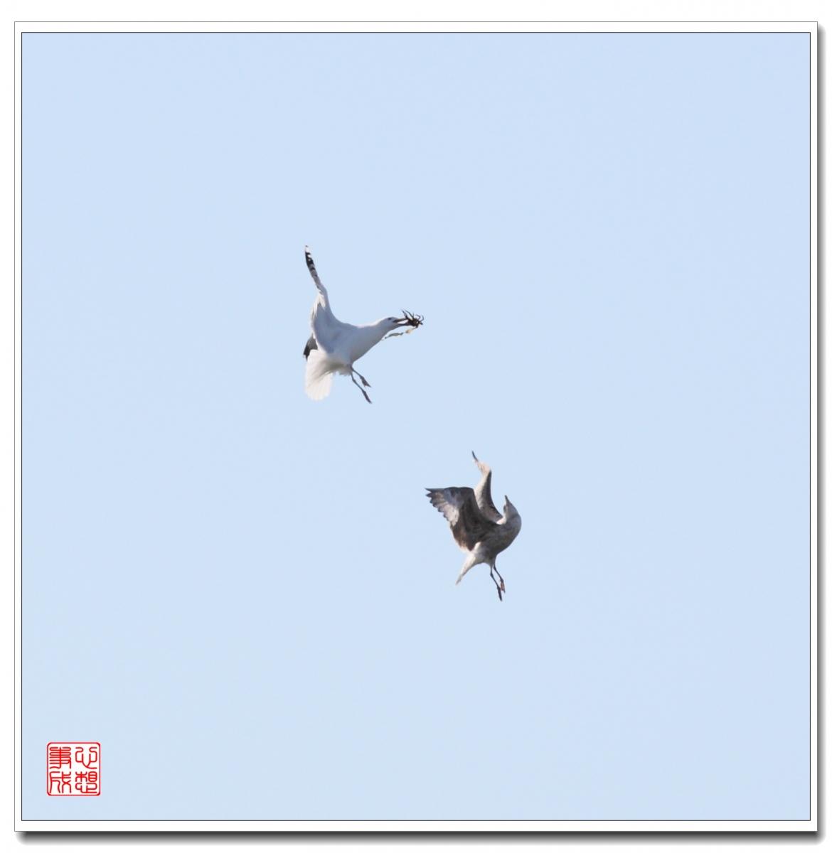 【心想事成】空中表演-海鸥_图1-19