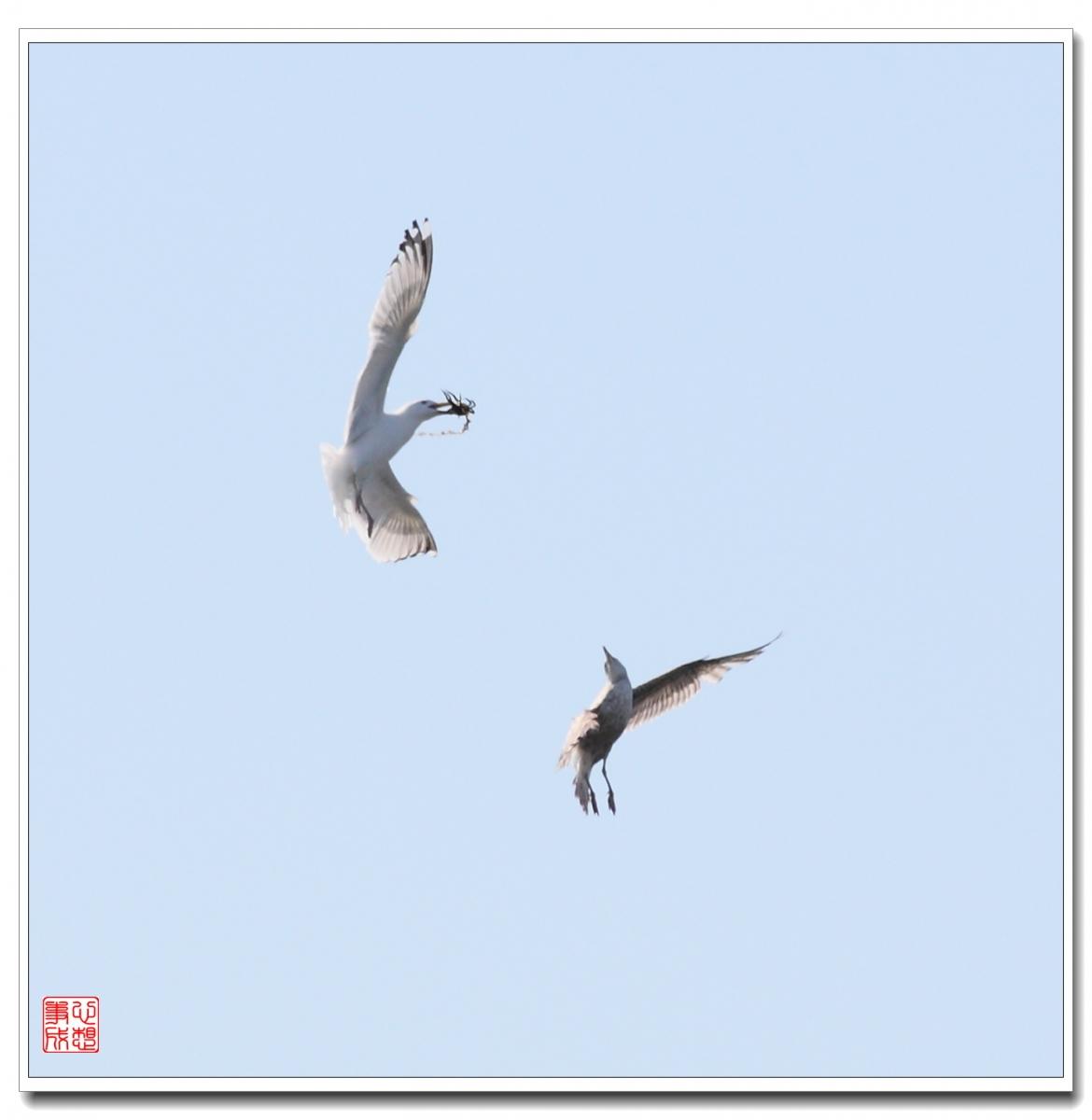 【心想事成】空中表演-海鸥_图1-20