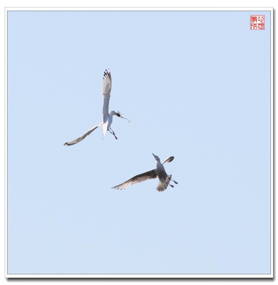 【心想事成】空中表演-海鸥_图1-21