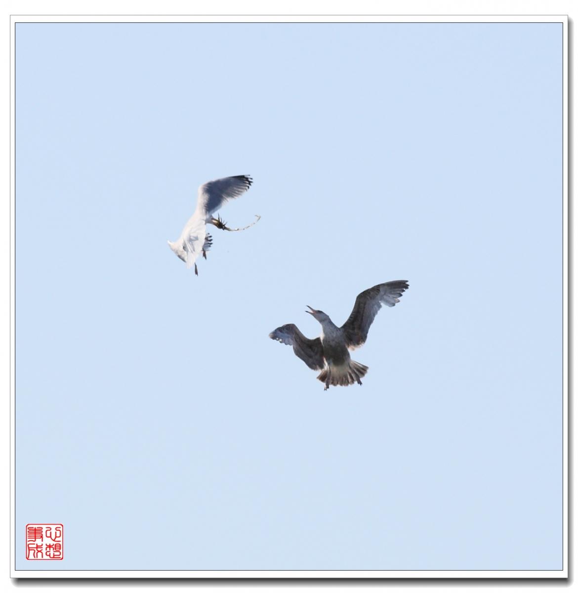 【心想事成】空中表演-海鸥_图1-23