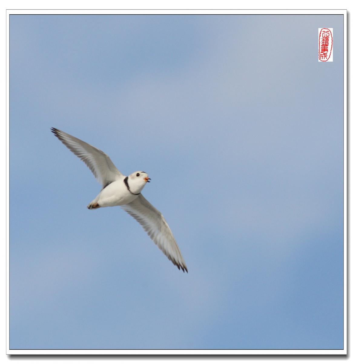 【心想事成】 飞鸟随拍图之二_图1-4