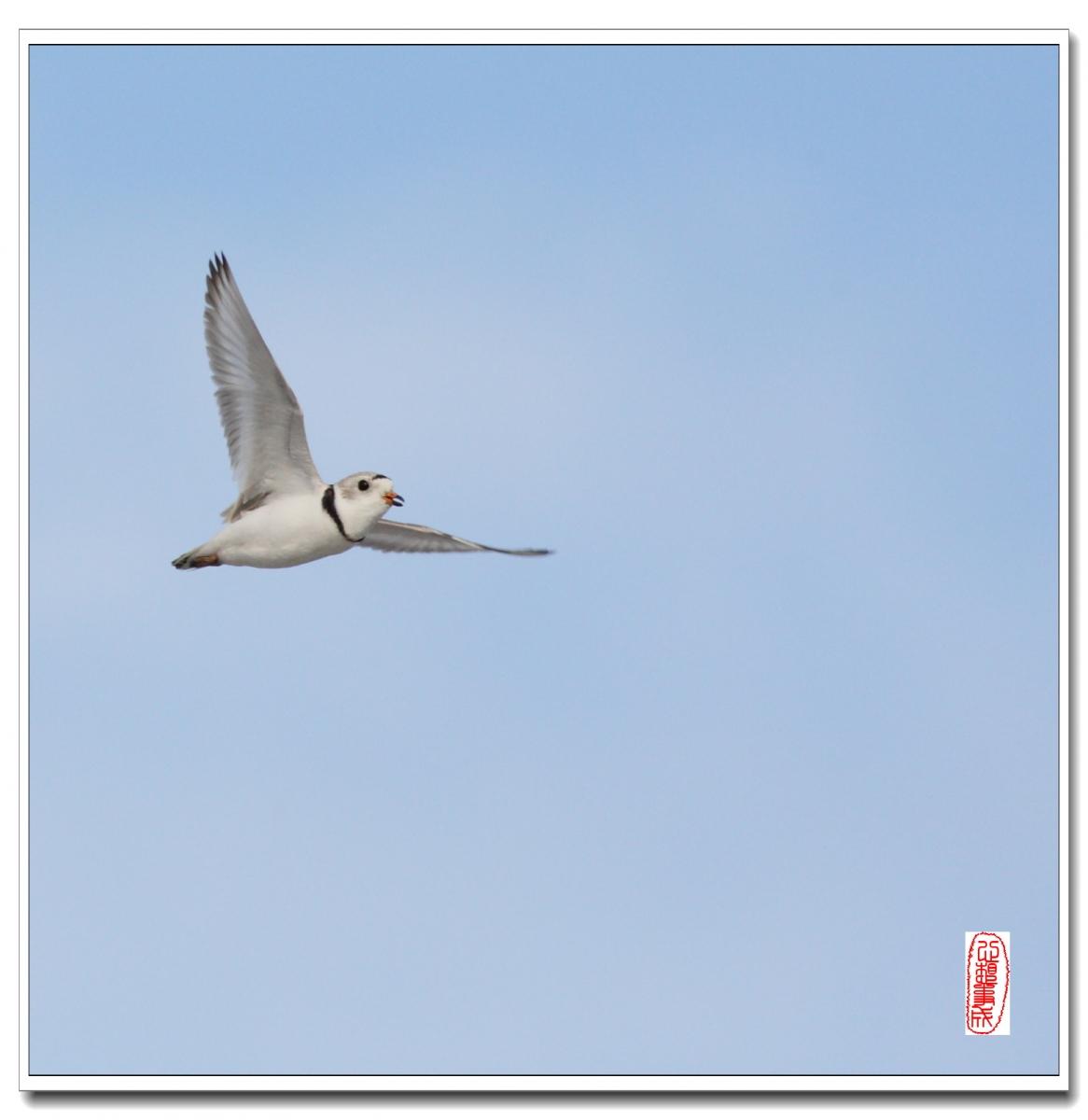 【心想事成】 飞鸟随拍图之二_图1-5