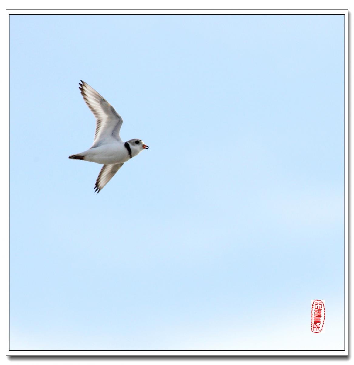 【心想事成】 飞鸟随拍图之二_图1-6