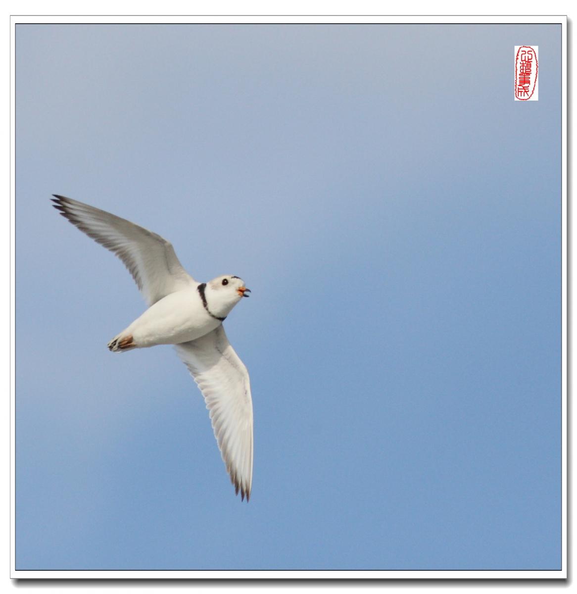 【心想事成】 飞鸟随拍图之二_图1-7