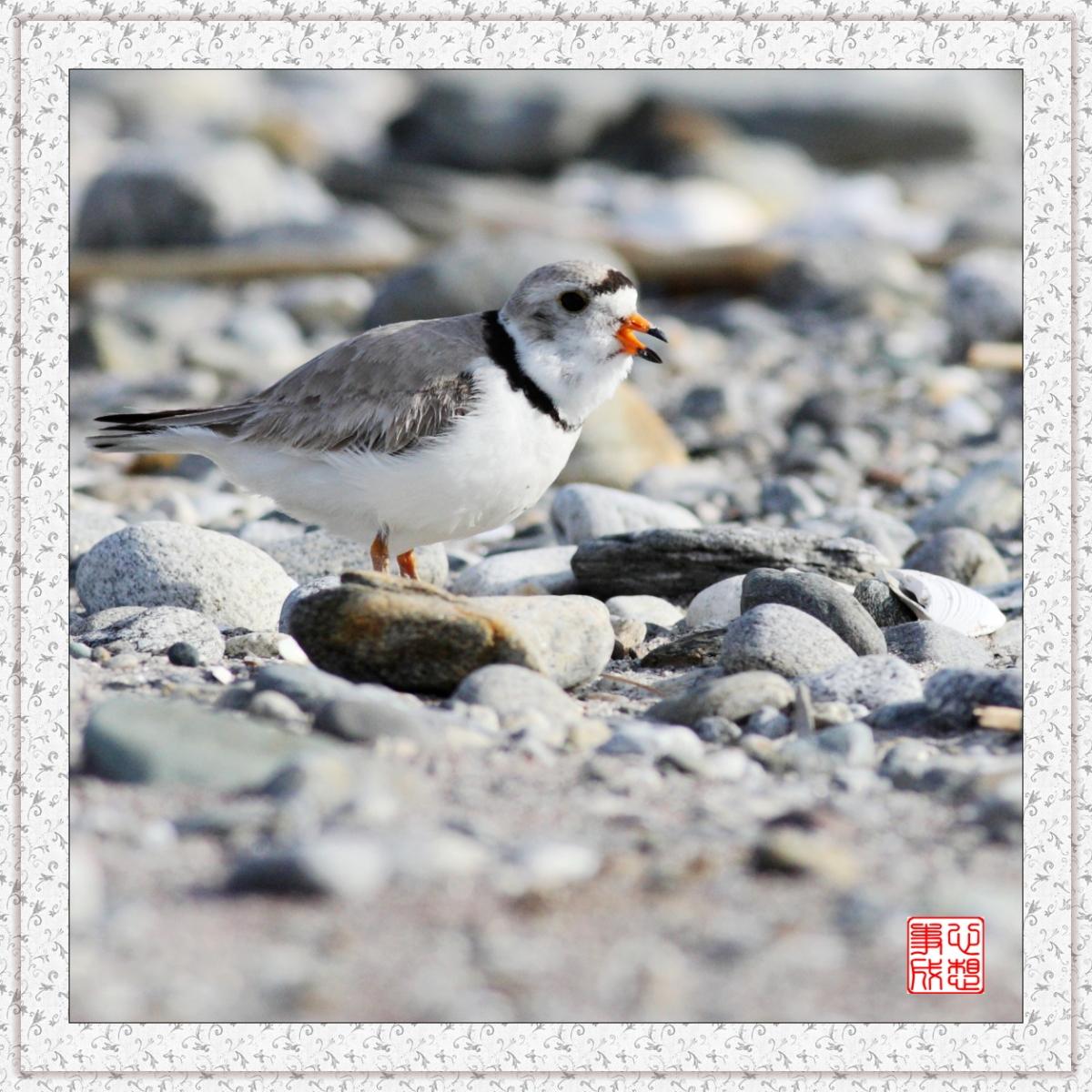【心想事成】 飞鸟随拍图之二_图1-13
