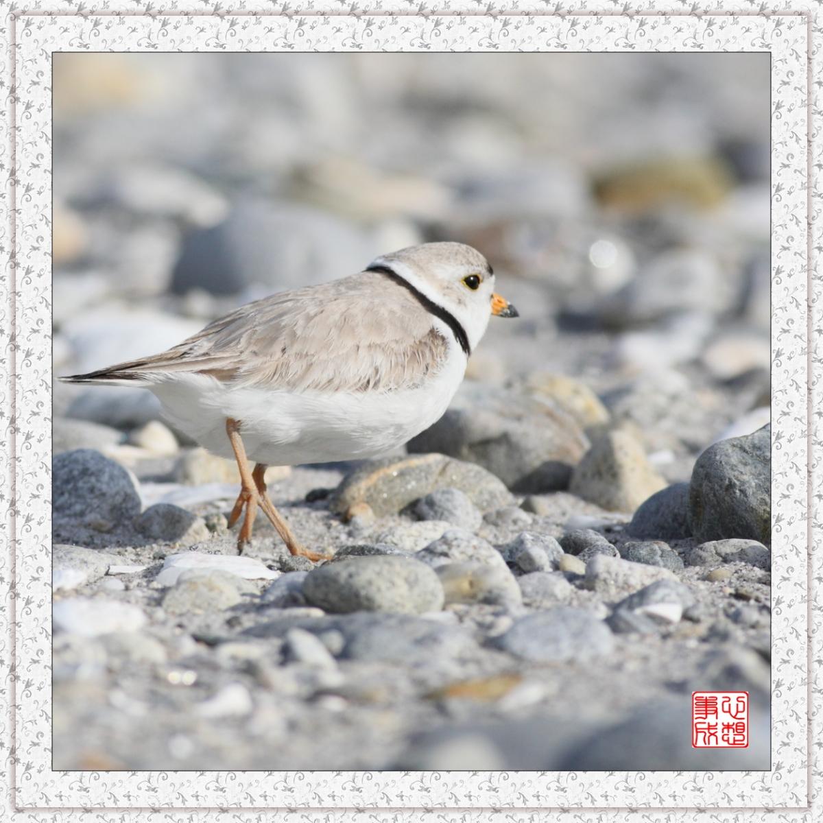 【心想事成】 飞鸟随拍图之二_图1-14