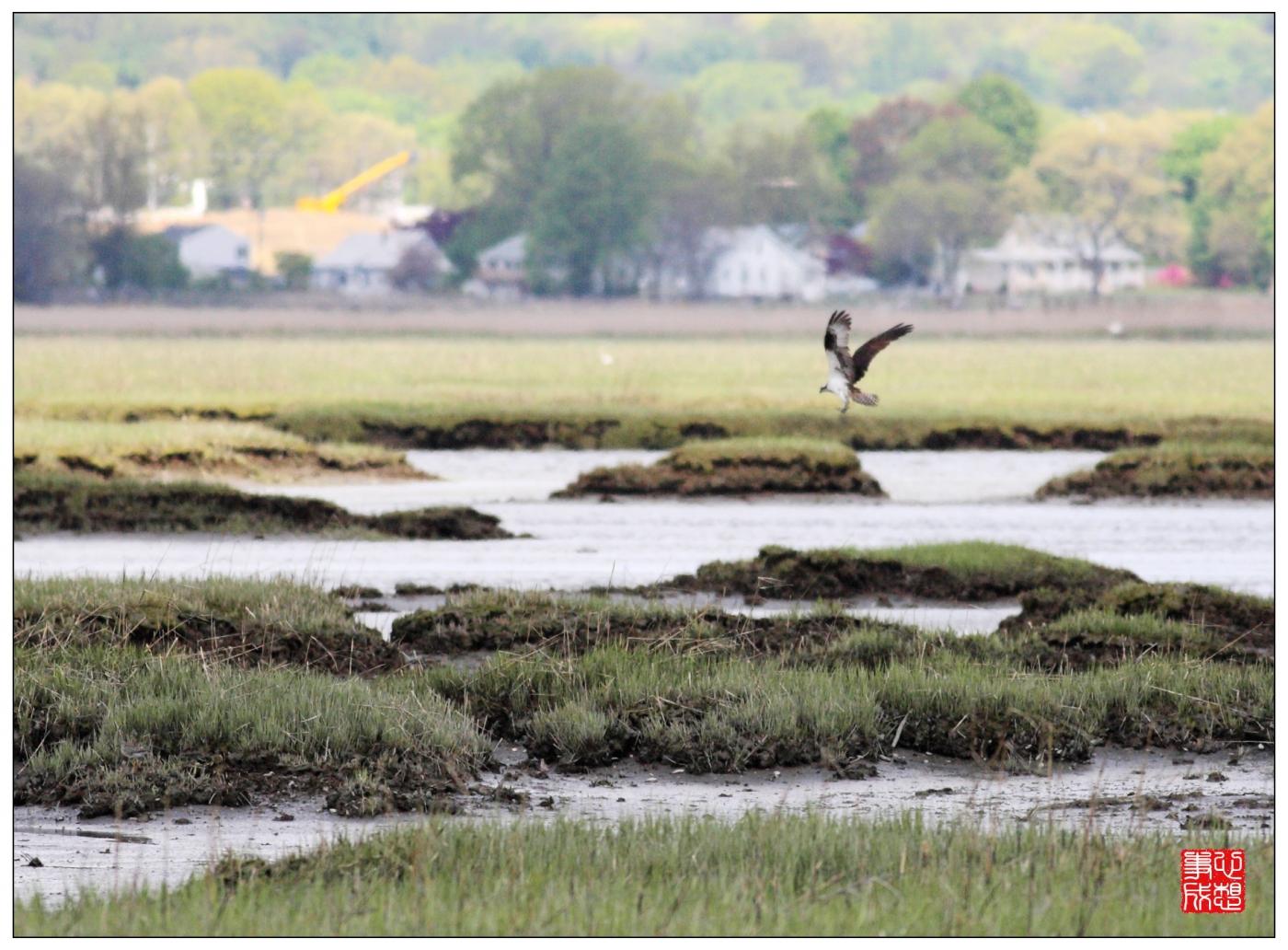【心想事成】Milford 鸟类保护区_图1-2