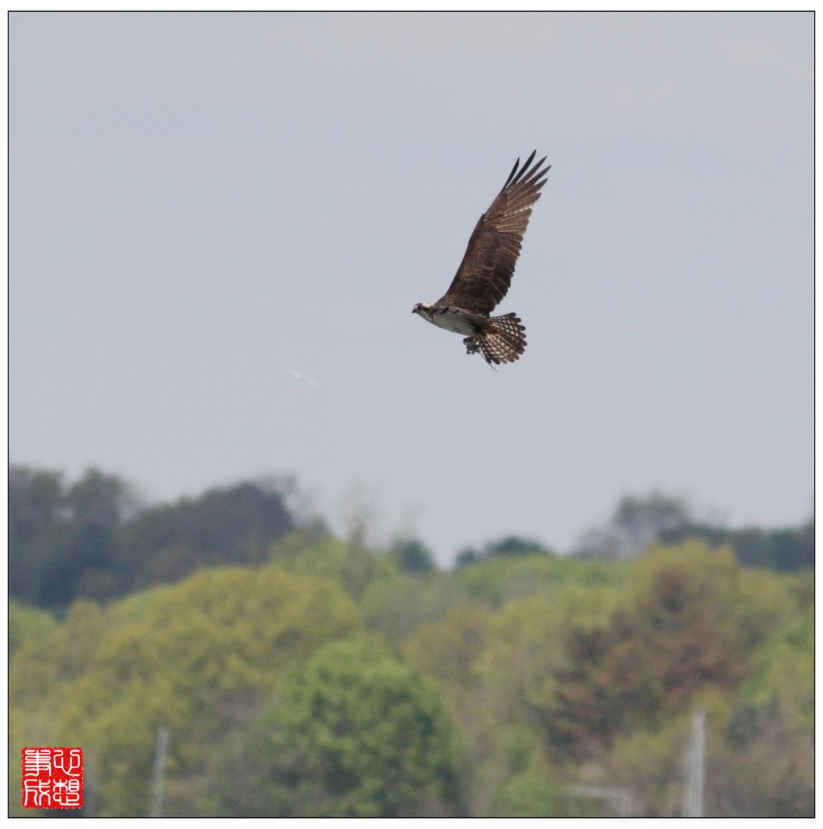 【心想事成】Milford 鸟类保护区_图1-3