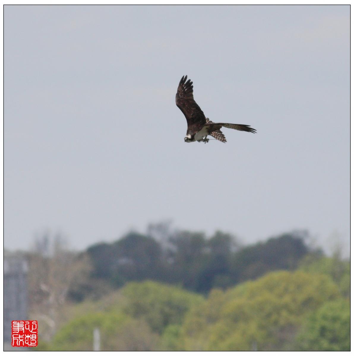 【心想事成】Milford 鸟类保护区_图1-5