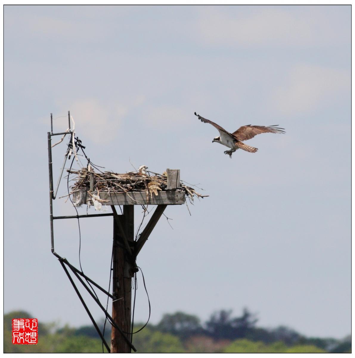 【心想事成】Milford 鸟类保护区_图1-6