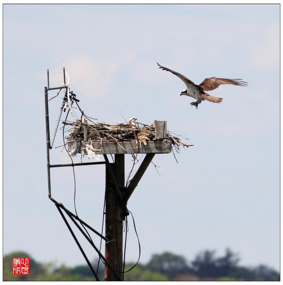【心想事成】Milford 鸟类保护区_图1-7
