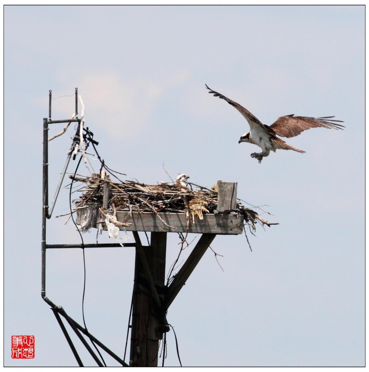 【心想事成】Milford 鸟类保护区_图1-8