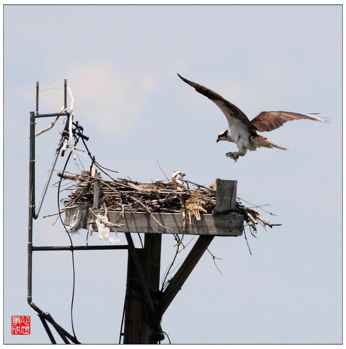 【心想事成】Milford 鸟类保护区_图1-9