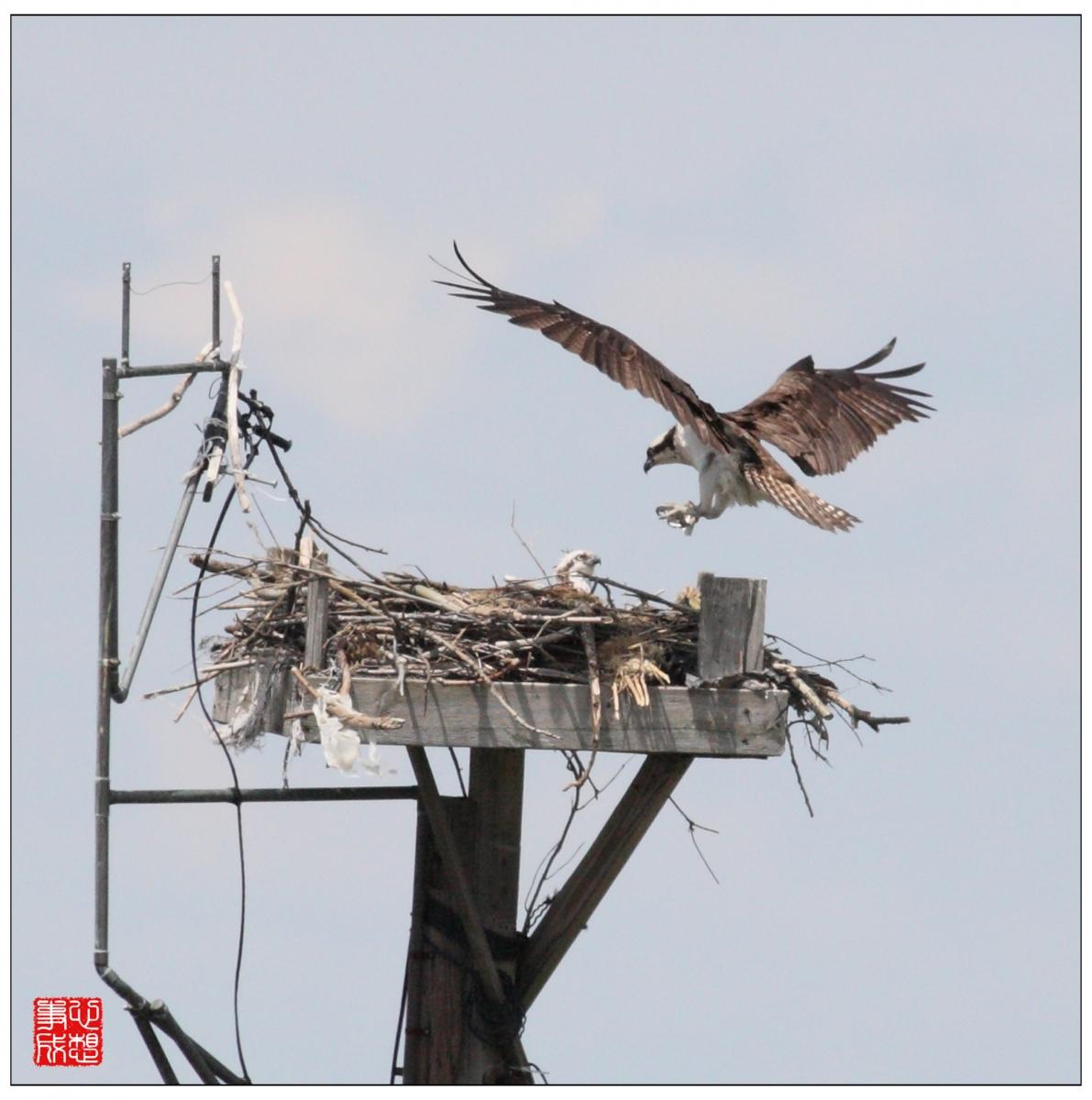 【心想事成】Milford 鸟类保护区_图1-10
