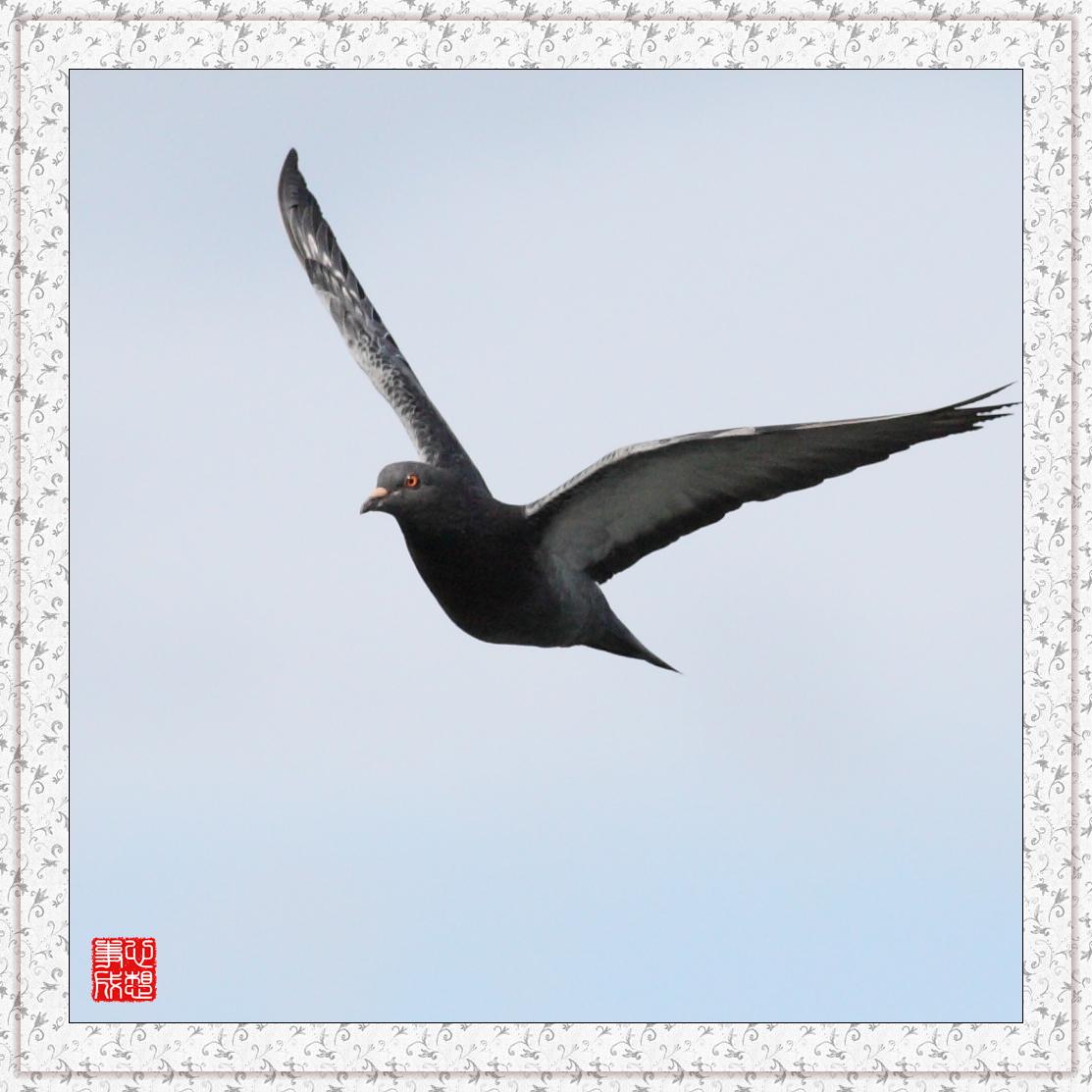 【心想事成】Milford 鸟类保护区_图1-11