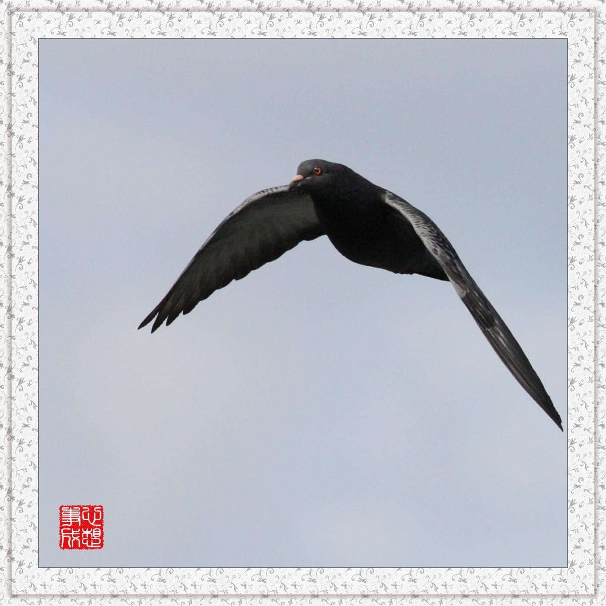 【心想事成】Milford 鸟类保护区_图1-12