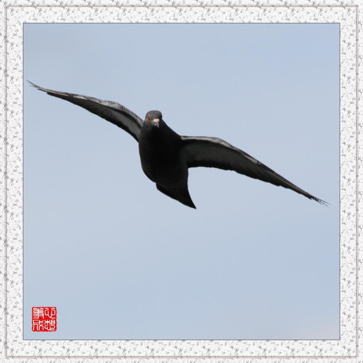 【心想事成】Milford 鸟类保护区_图1-13