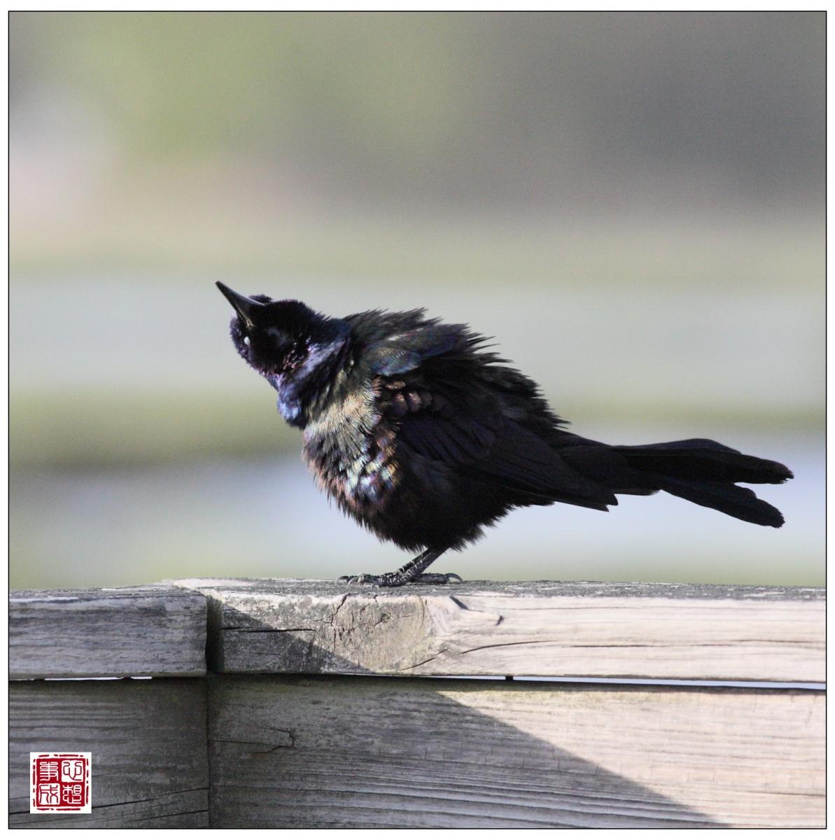 【心想事成】Milford 鸟类保护区_图1-14