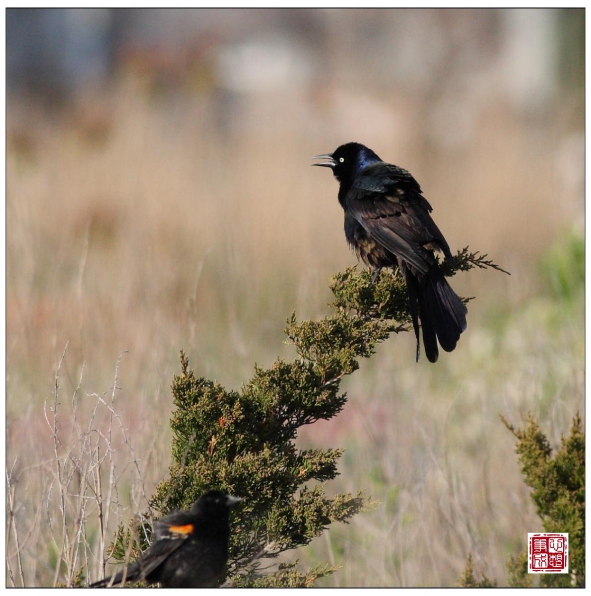 【心想事成】Milford 鸟类保护区_图1-18