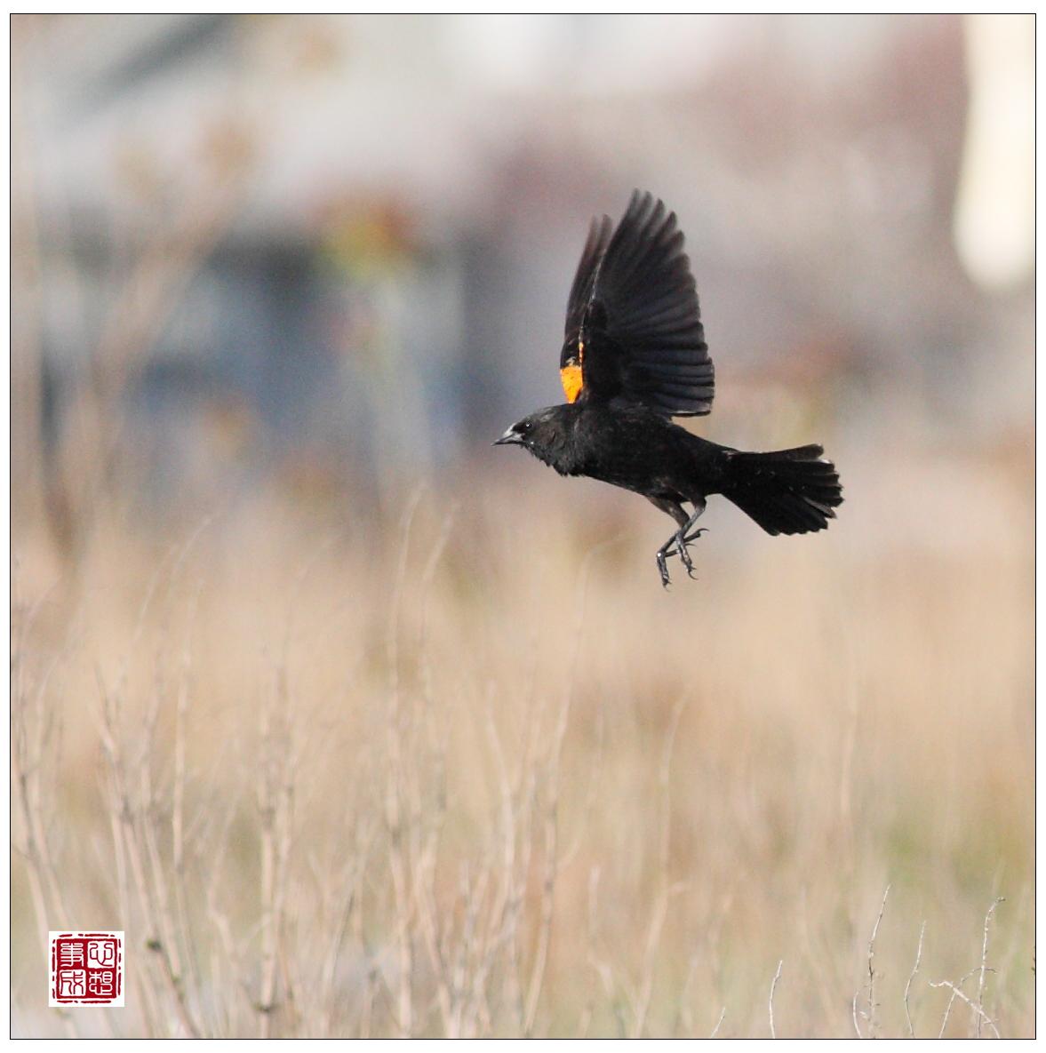 【心想事成】Milford 鸟类保护区_图1-19
