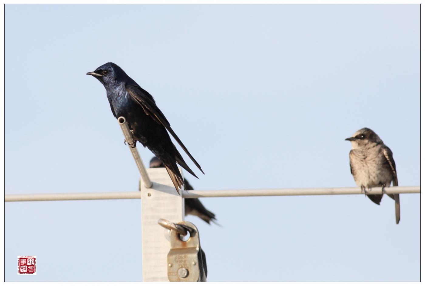 【心想事成】Milford 鸟类保护区_图1-20