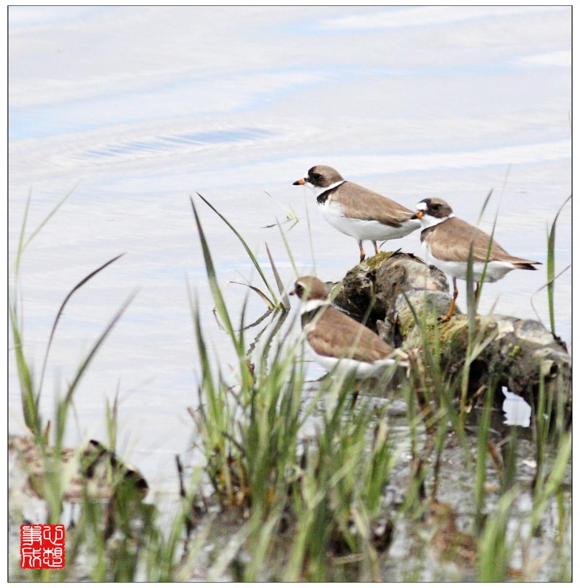 【心想事成】Milford 鸟类保护区_图1-21