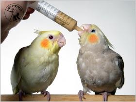 【相机人生】(390)一手喂鸟