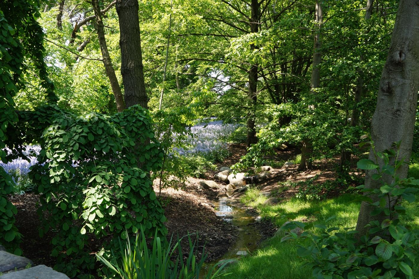 [jiejoy]布鲁克林植物园---Bluebell Wood_图1-1