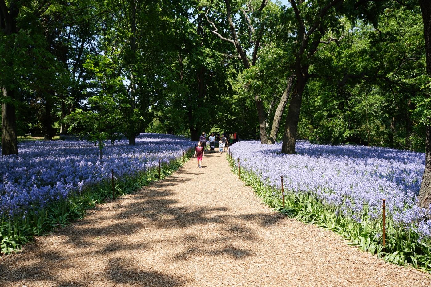 [jiejoy]布鲁克林植物园---Bluebell Wood_图1-7