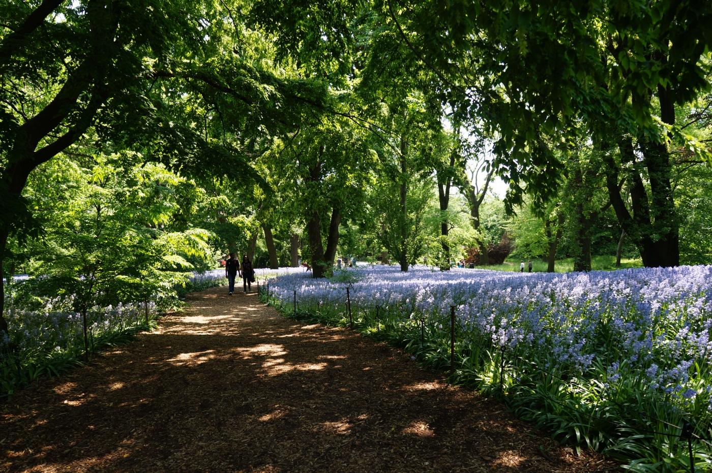 [jiejoy]布鲁克林植物园---Bluebell Wood_图1-11