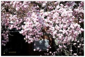 【小虫摄影】赏花不忘种花人--