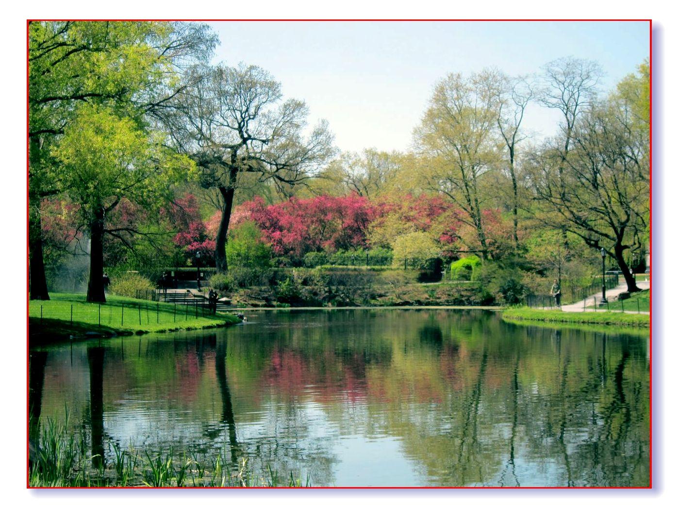 春满中央公园_图1-2