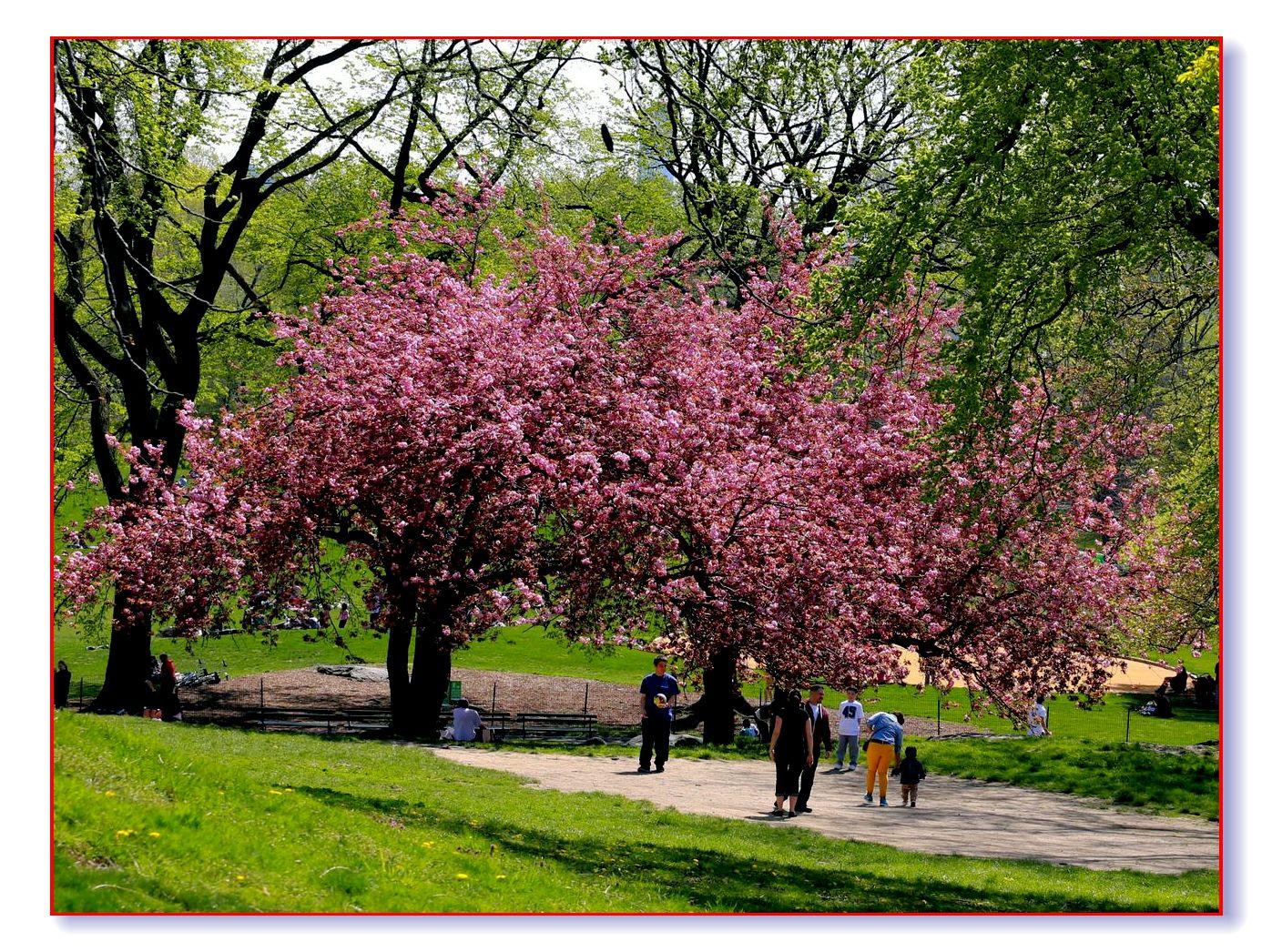 春满中央公园_图1-13