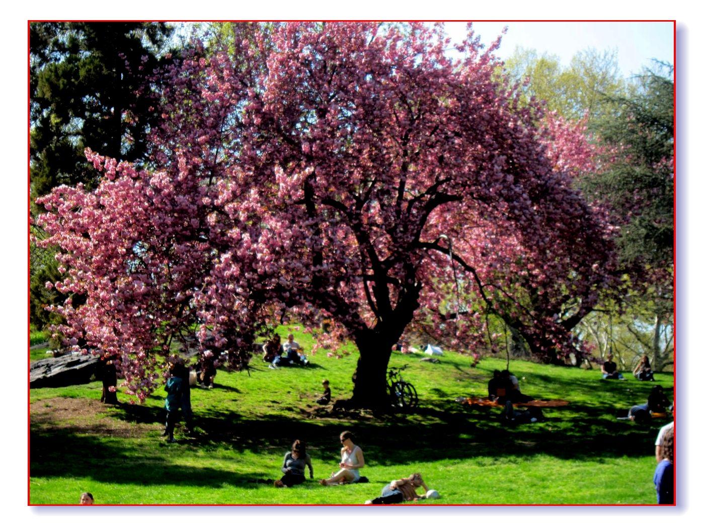 春满中央公园_图1-21