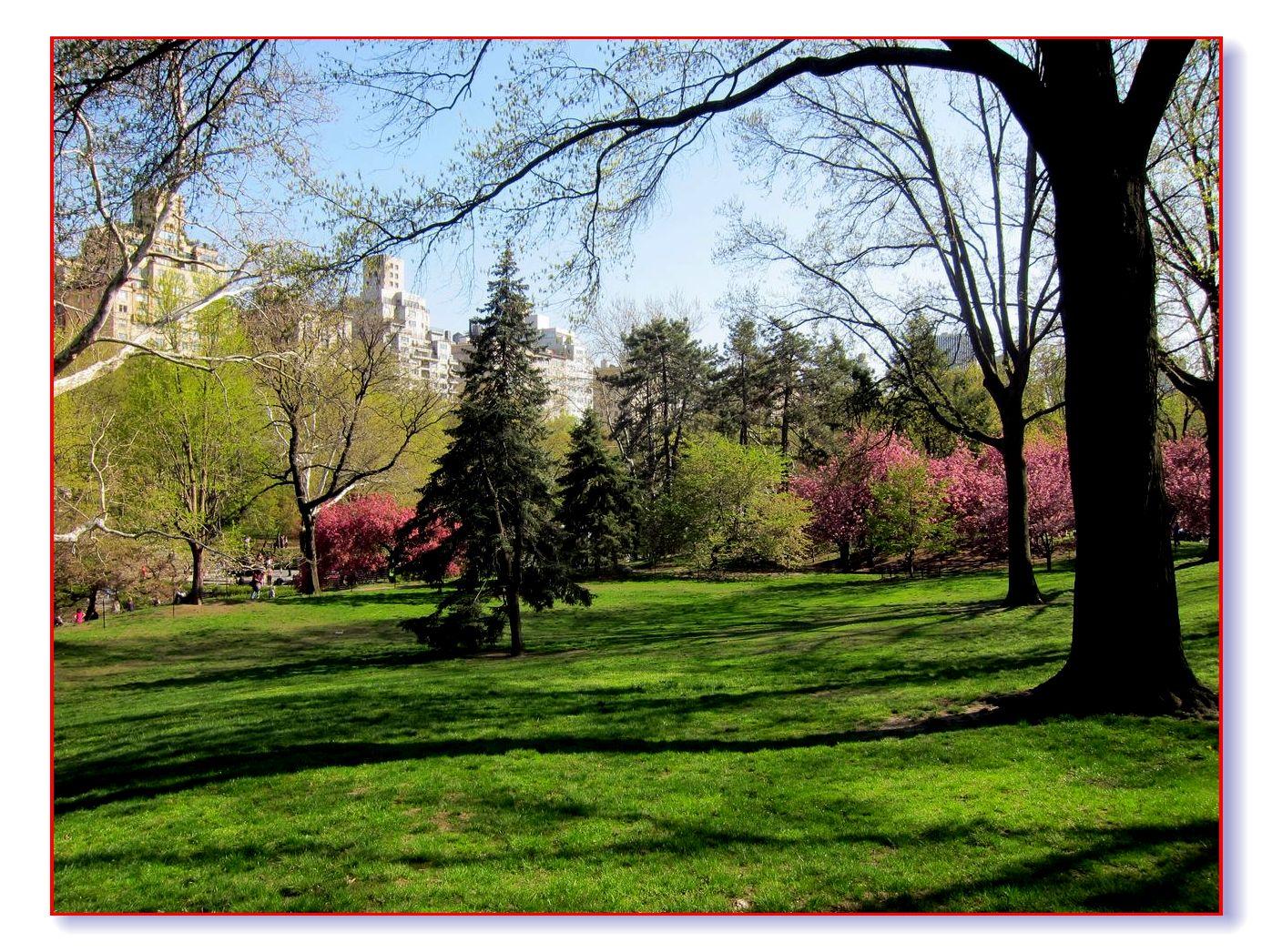春满中央公园_图1-22