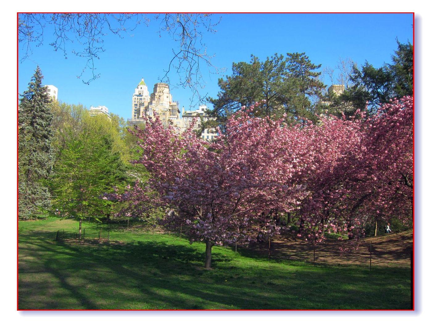 春满中央公园_图1-23
