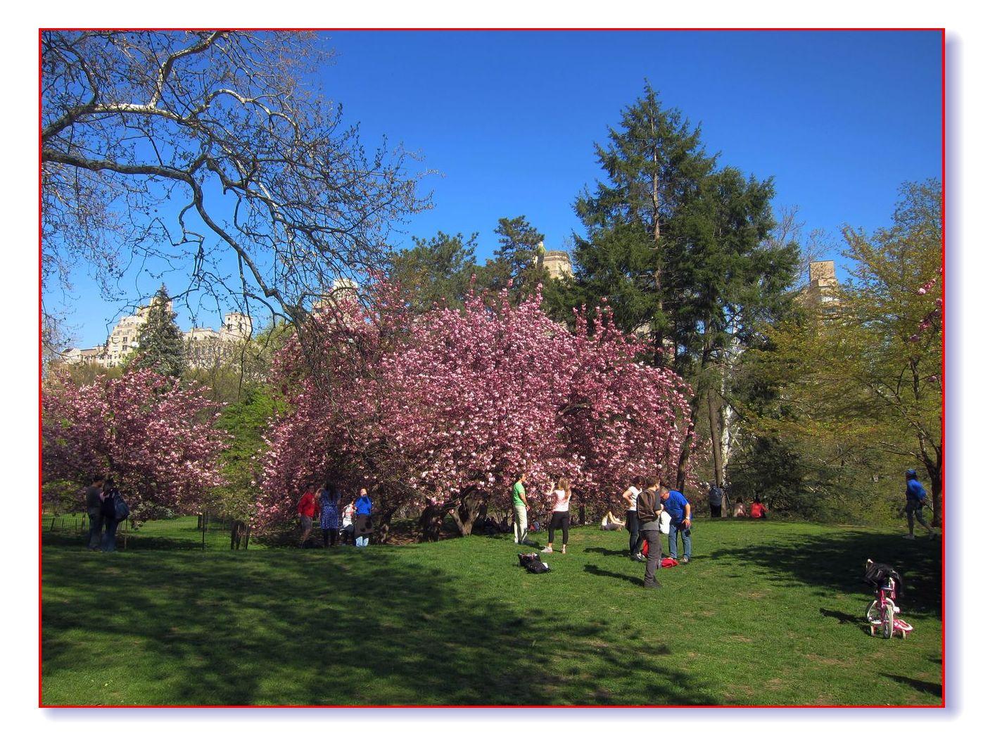 春满中央公园_图1-24