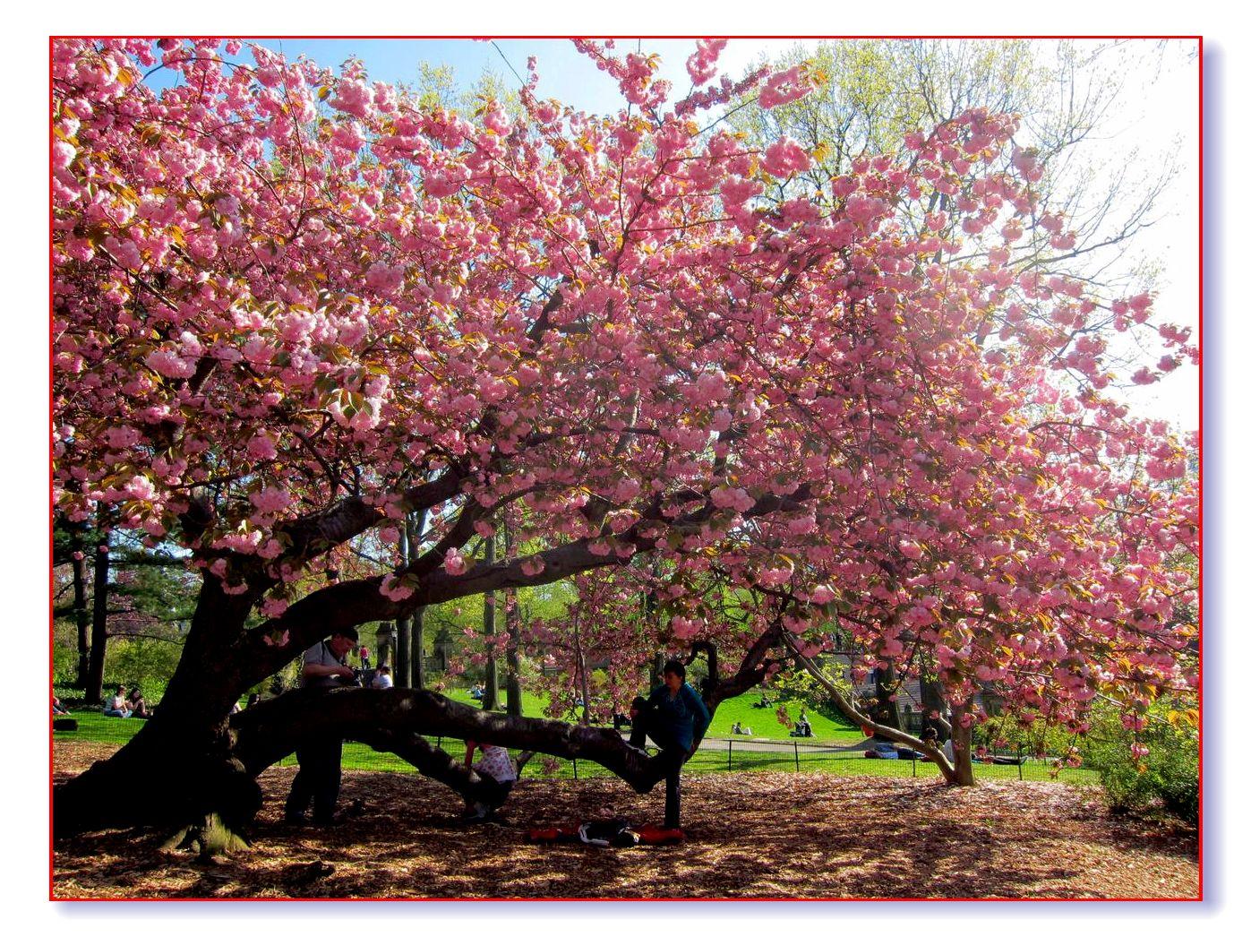 春满中央公园_图1-29