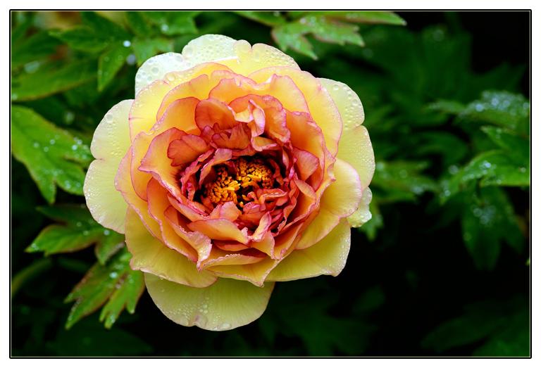 随拍花卉_图1-1