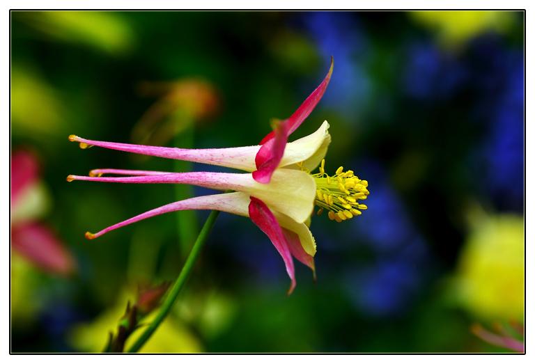 随拍花卉_图1-3