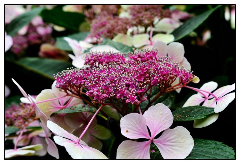 随拍花卉_图1-4