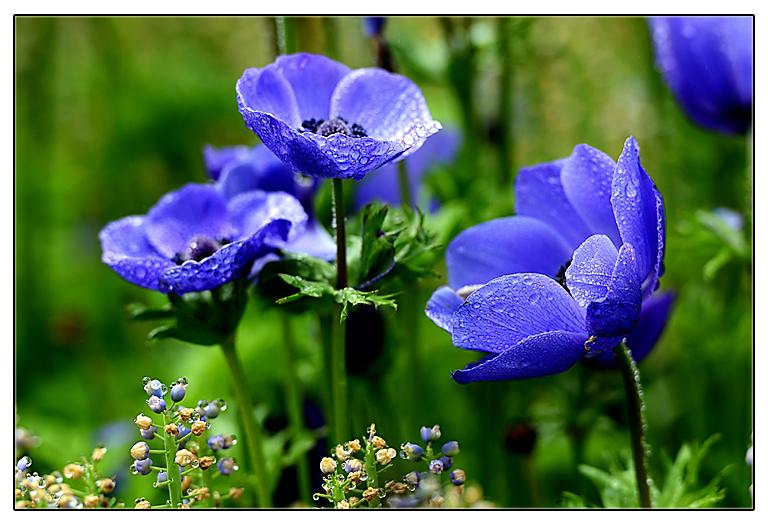 随拍花卉_图1-2