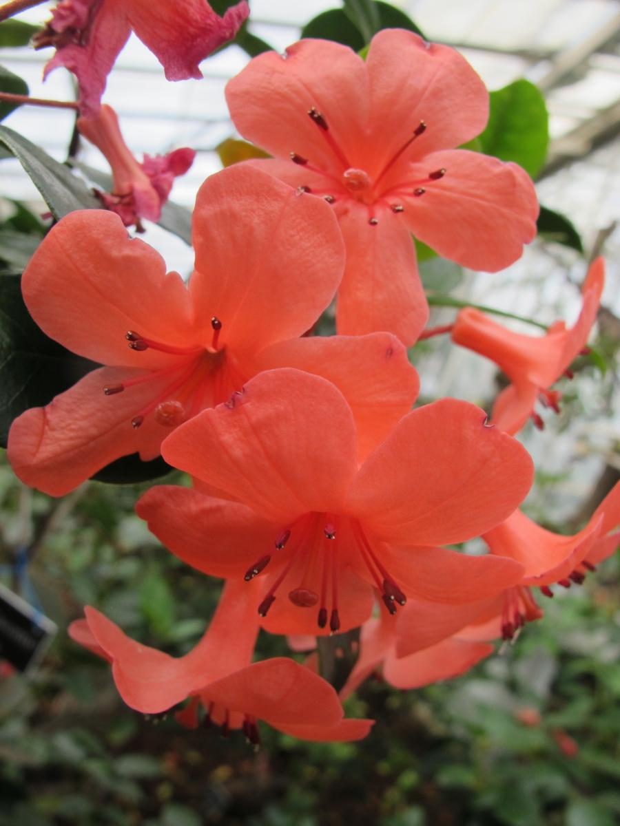 求植物中文名_图1-2