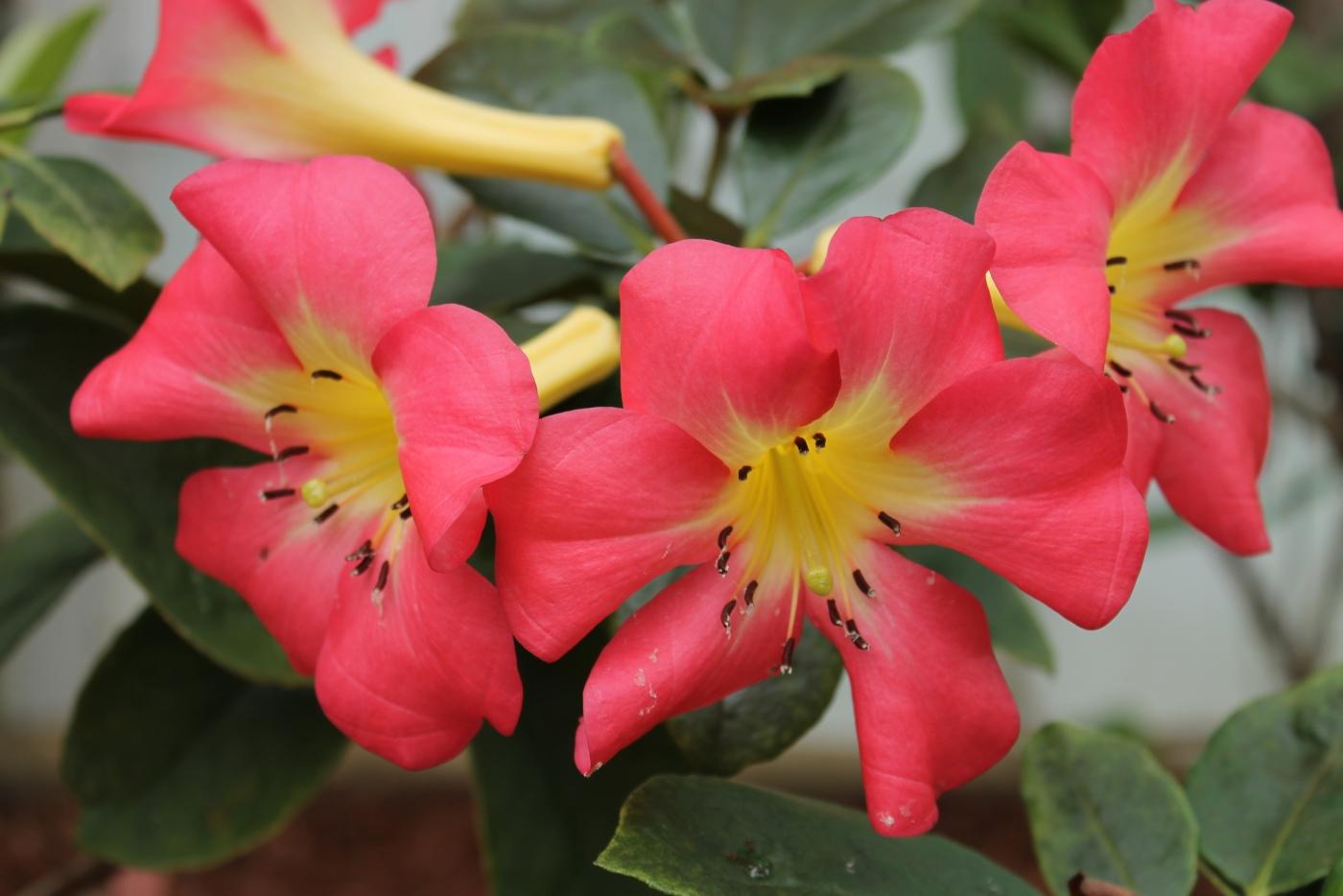 求植物中文名_图1-7