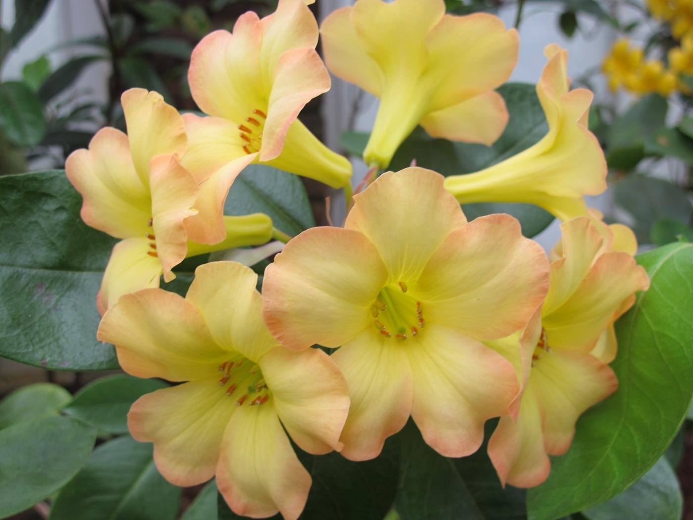 求植物中文名_图1-8