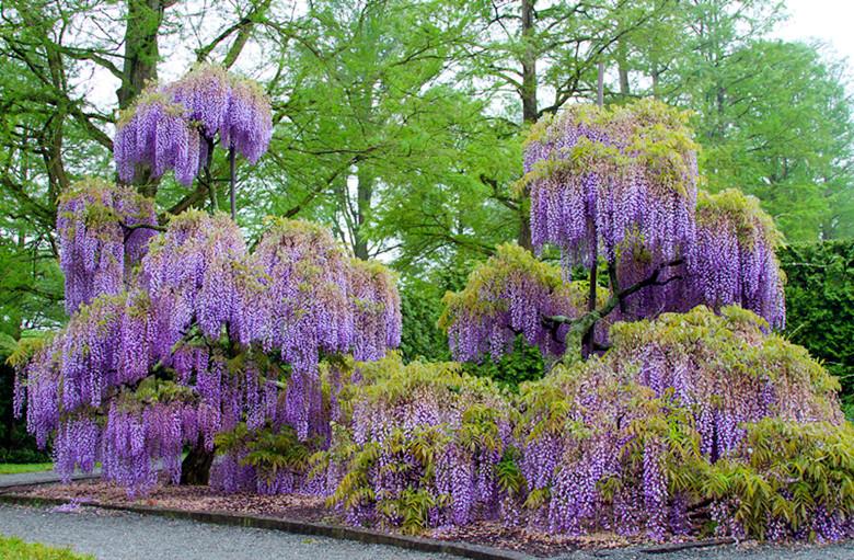 长木花园Longwood gardens_图1-33