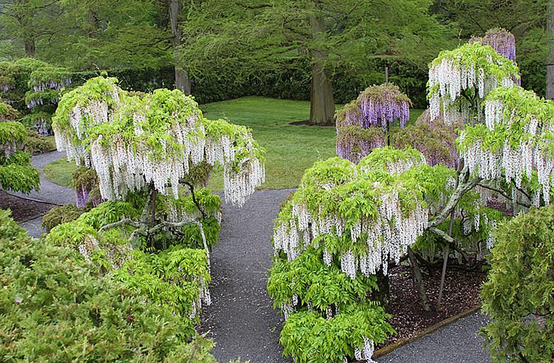 长木花园Longwood gardens_图1-34
